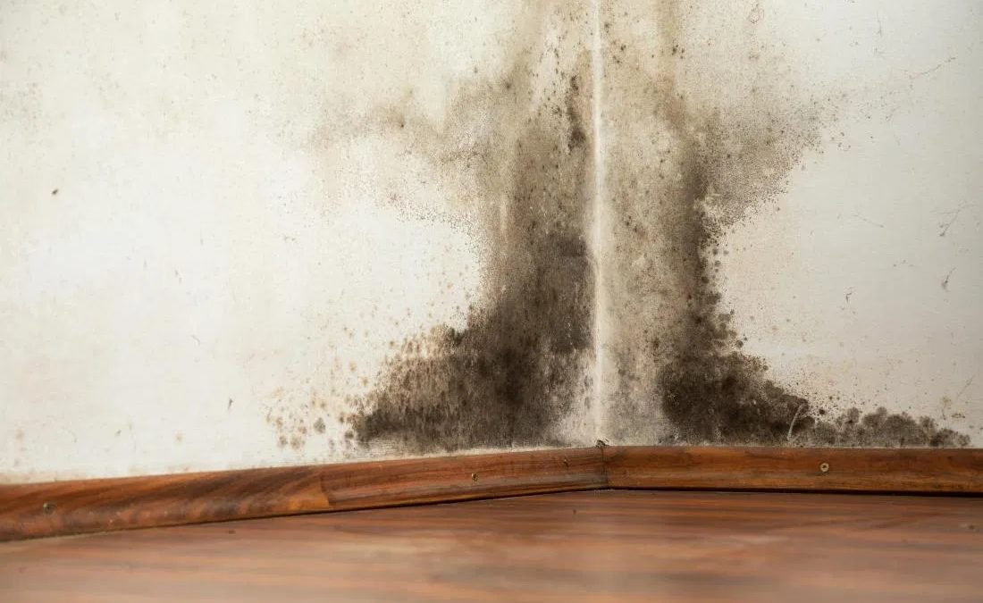 When To Go To A Mold Exposure Treatment Center
