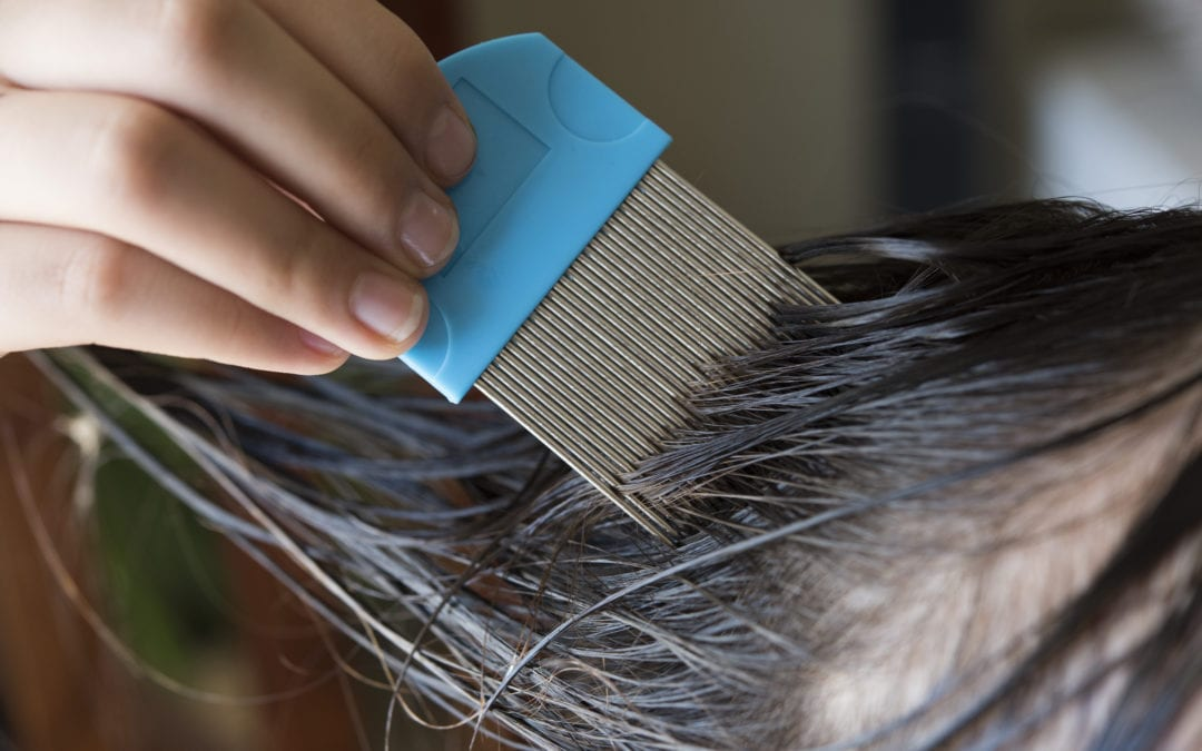 Everything You Need to Know About Lice